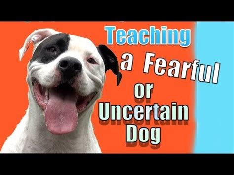 Essay on the loaded dog training